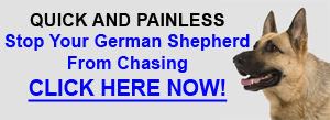 Stop German Shepherd Chasing
