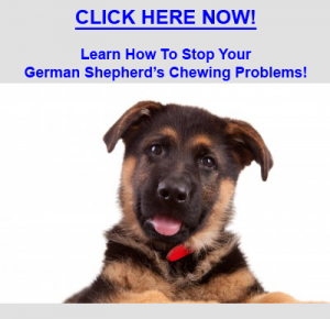 Stop German Shepherd Chewing