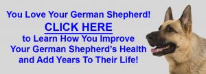 German Shepherd Schutzhund