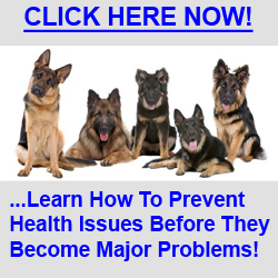 Stop German Shepherd Scratching