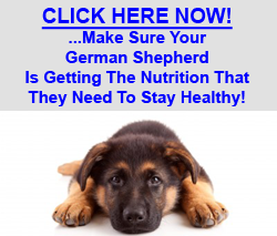 German Shepherd Food Health
