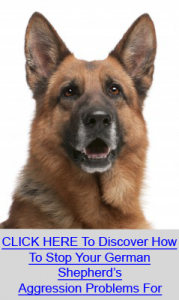 Stop German Shepherd Aggression