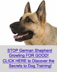 german shepherd growling - photo #32